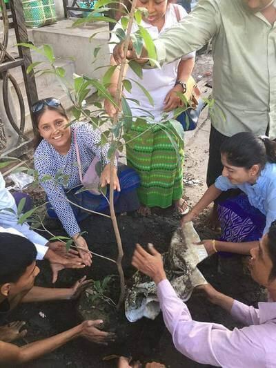 Myanmar-post-urban-tree